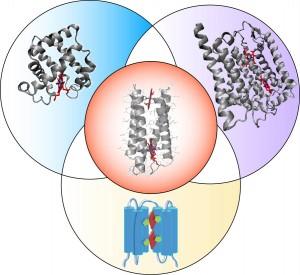 8.10 IRG4 one protein scaffold 2