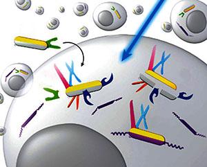 Ivan J. Dmochowski / Designing Light-Responsive Molecules for Biomedical Applications